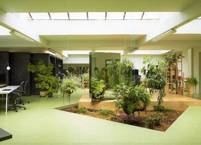 De 5 voordelen van planten op kantoor